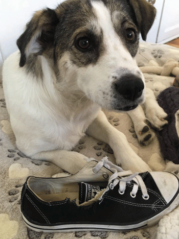 Converse Replaced These Shoes Chewed Up by Puppy