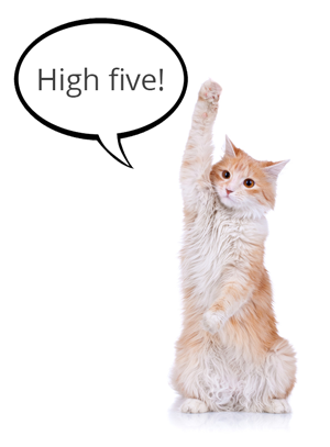 high-five-cat-for-re-engagement-campaign-results.png